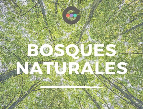 Bosques naturales y artificiales